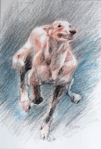 dessins chiens, sanguine